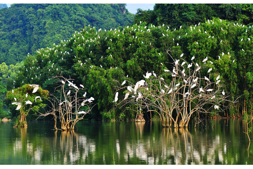 Vườn Chim Thung Nham